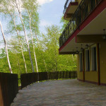 The silver birches forest surrounding hotel ASara